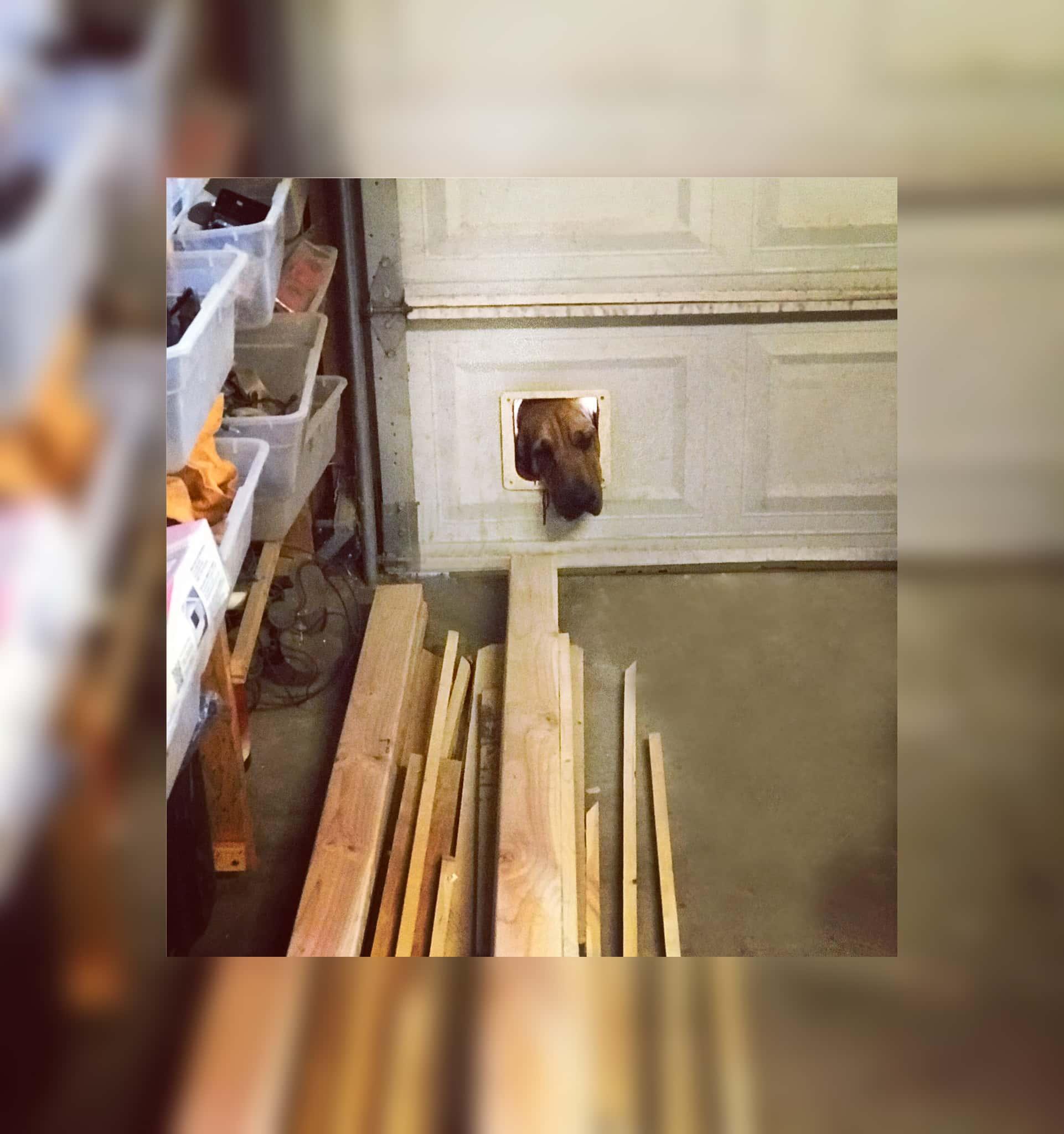 dog-in-cat-door.jpg