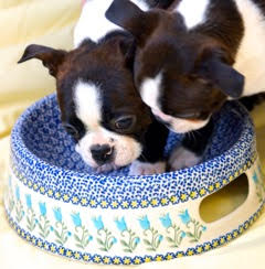 dogs-in-bowl.jpg