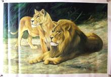 LIONS medium large OIL PAINTING