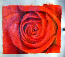 ROSE UP CLOSE OIL PAINTING