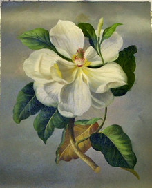 WHITE FLOWER AND BUD OIL PAINTING