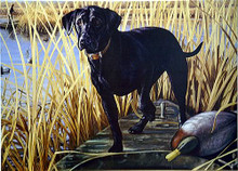 Photo of BLACK LAB ON BOAT HUNTING SIGN