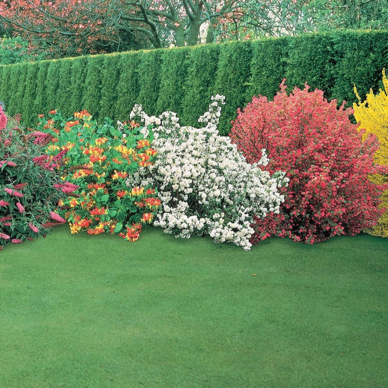 Winter colour in the garden: trees and shrubs with coloured bark