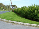 100 Green Privet Hedging Plants Ligustrum Hedge 40-60cm,Dense Evergreen,Big Pots