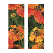 Orange Poppies (Double Banner)