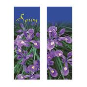 Spring Beauty Siberian Iris Banner