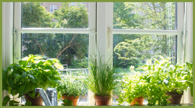 Why I Became Obsessed With Indoor Gardening