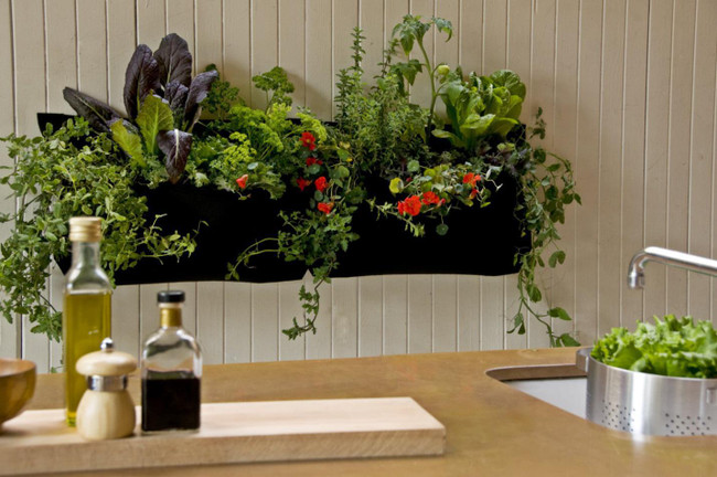​All You Need to Know about Starting An Indoor Garden