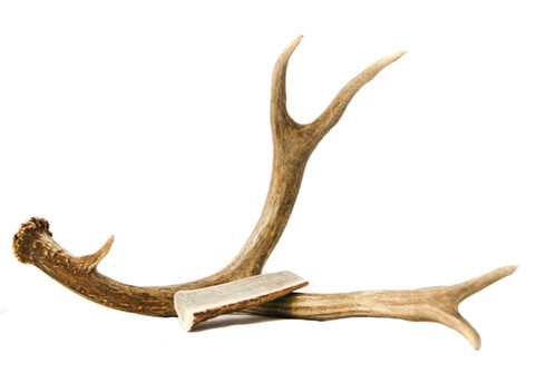 Small Antler Chew for Dogs and Cats