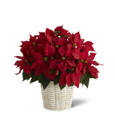 TheRed Poinsettia Basket (Large)