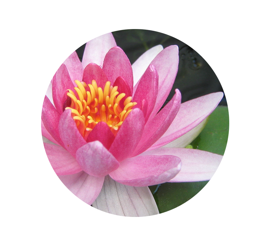 April Birth Flower Color Meanings: Birth Month Flowers And Their Meanings