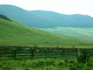 Mountain Pass - Native Grass Seeds
