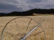 Santa Fe Trail - Native Grass Seeds