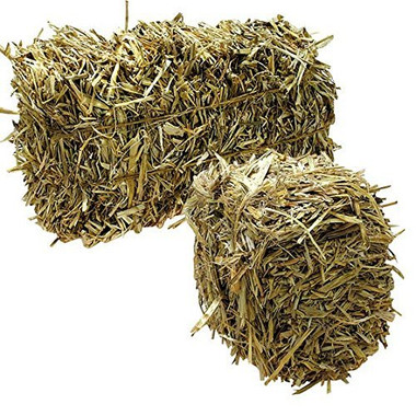 pond barley straw for algae control and water clarity in water gardens and ponds