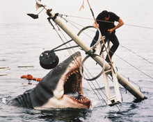 This is an image of 211650 Jaws Photograph & Poster