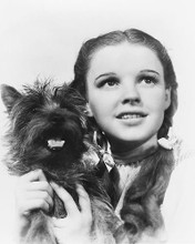 This is an image of 176607 The Wizard of Oz Photograph & Poster