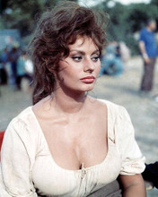 This is an image of Photograph & Poster of Sophia Loren 284442