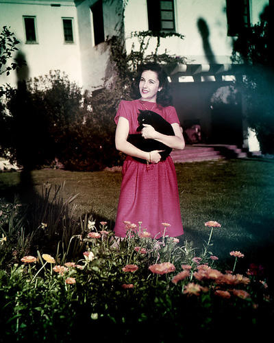 This is an image of Photograph & Poster of Elizabeth Taylor 285365
