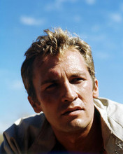 This is an image of Photograph & Poster of Roy Thinnes 292114