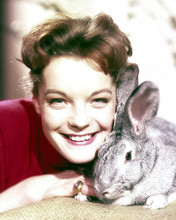 This is an image of Photograph & Poster of Romy Schneider 292203