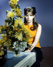 This is an image of Photograph & Poster of Barbra Streisand 293174