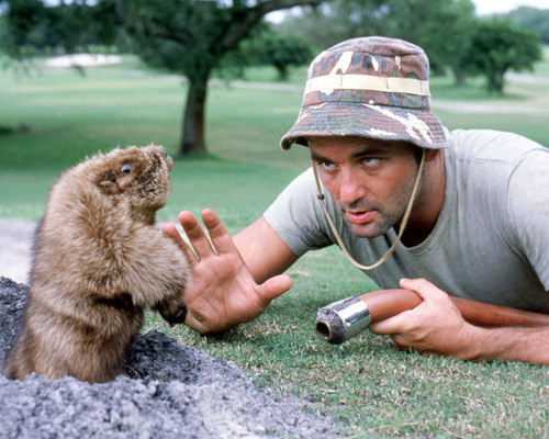 This is an image of Photograph & Poster of Caddyshack 295491