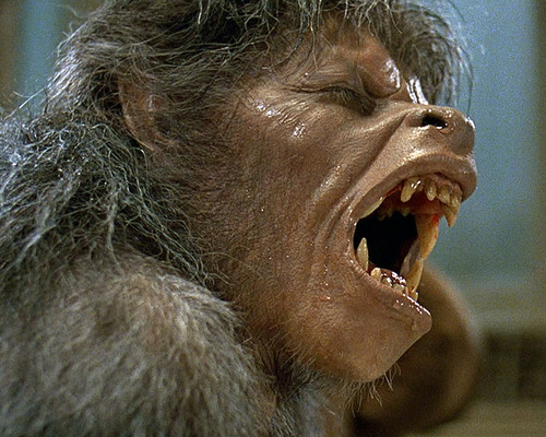 This is an image of Photograph & Poster of American Werewolf in London 295495