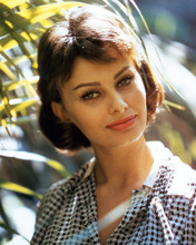 This is an image of Premium Photograph & Poster of Sophia Loren 297482