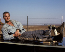 This is an image of Photograph & Poster of Paul Newman 297993