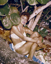 This is an image of Photograph & Poster of Joan Collins 286967