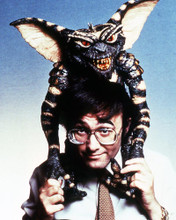 This is an image of Photograph & Poster of Gremlins 289822