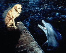 This is an image of Photograph & Poster of Flipper 289887