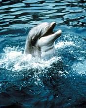 This is an image of Photograph & Poster of Flipper 289888