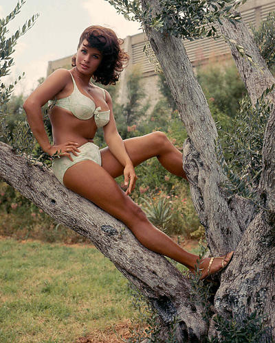 This is an image of 281208 Senta Berger Photograph & Poster