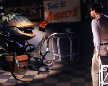 This is an image of 286880 Little Shop of Horrors Photograph & Poster