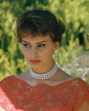 This is an image of 272805 Sophia Loren Photograph & Poster