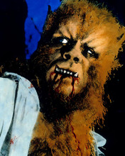 This is an image of 282903 Curse of the Werewolf Photograph & Poster