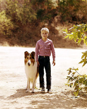 This is an image of 283954 Jon Provost and Lassie Photograph & Poster