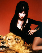 This is an image of 292675 Elvira Photograph & Poster