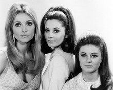 This is an image of Prints & Posters of Valley of the Dolls 103406
