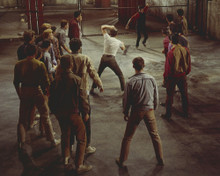 This is an image of Prints & Posters of West Side Story 299699