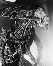 This is an image of Prints & Posters of Alien 104012