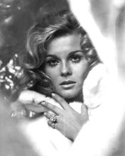 This is an image of Photograph & Poster of Ann-Margret 101782