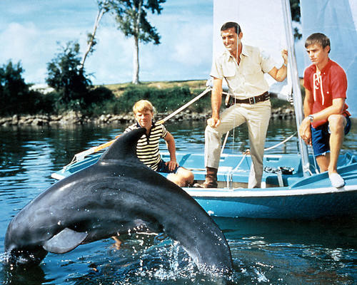 This is an image of 281384 Flipper Photograph & Poster