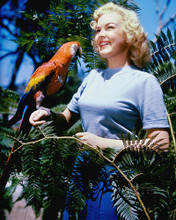 This is an image of 227409 June Haver Photograph & Poster