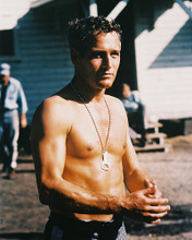 This is an image of 212513 Paul Newman Photograph & Poster