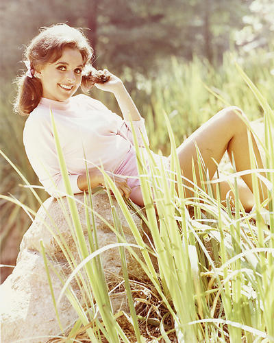 This is an image of 248640 Dawn Wells Photograph & Poster