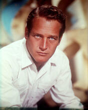 This is an image of 256231 Paul Newman Photograph & Poster