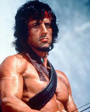 This is an image of 261410 Sylvester Stallone Photograph & Poster