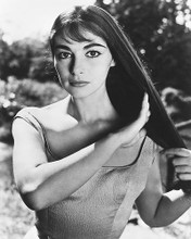 This is an image of 173386 Pier Angeli Photograph & Poster
